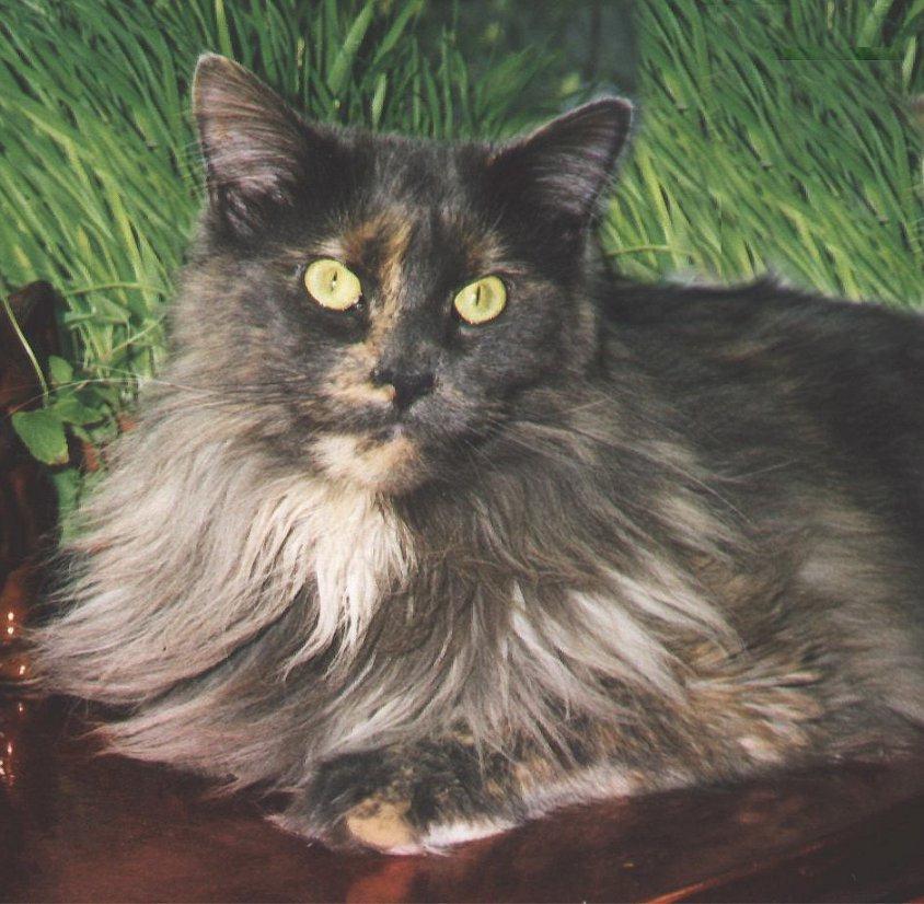 Weisses Medaillon Katzecat Kat Poes Katt Felis Chatte Gatto