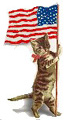 Flagcat-usa2.jpg (7257 Byte)