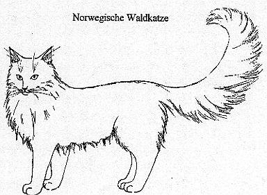 Unterschied Norwegische Waldkatze Maine Coon