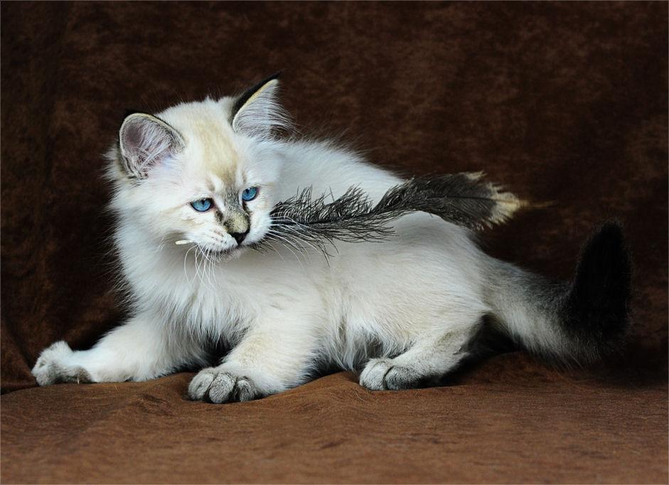Preis Katzecat Kat Poes Katt Felis Chatte Gatto Gato Kot Kedi