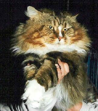 Image of Moritz The Legendary