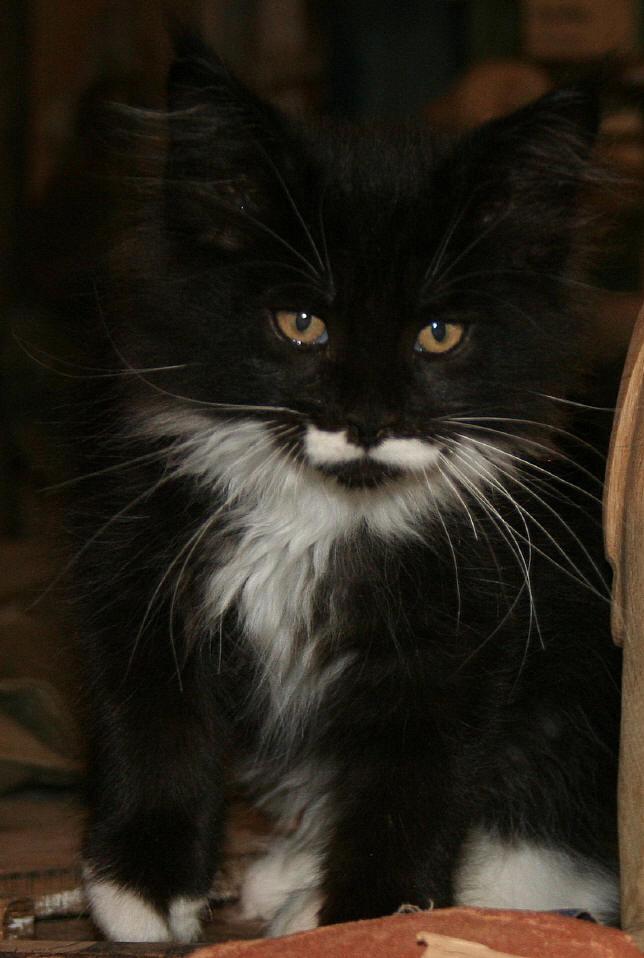 Schröders Katze