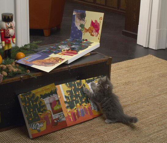 die farbe wei katze cat kat poes katt felis chatte gatto gato kot kedi. Black Bedroom Furniture Sets. Home Design Ideas