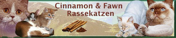 cinnamon cats